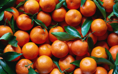 Los márgenes agroalimentarios y las cadenas de suministro